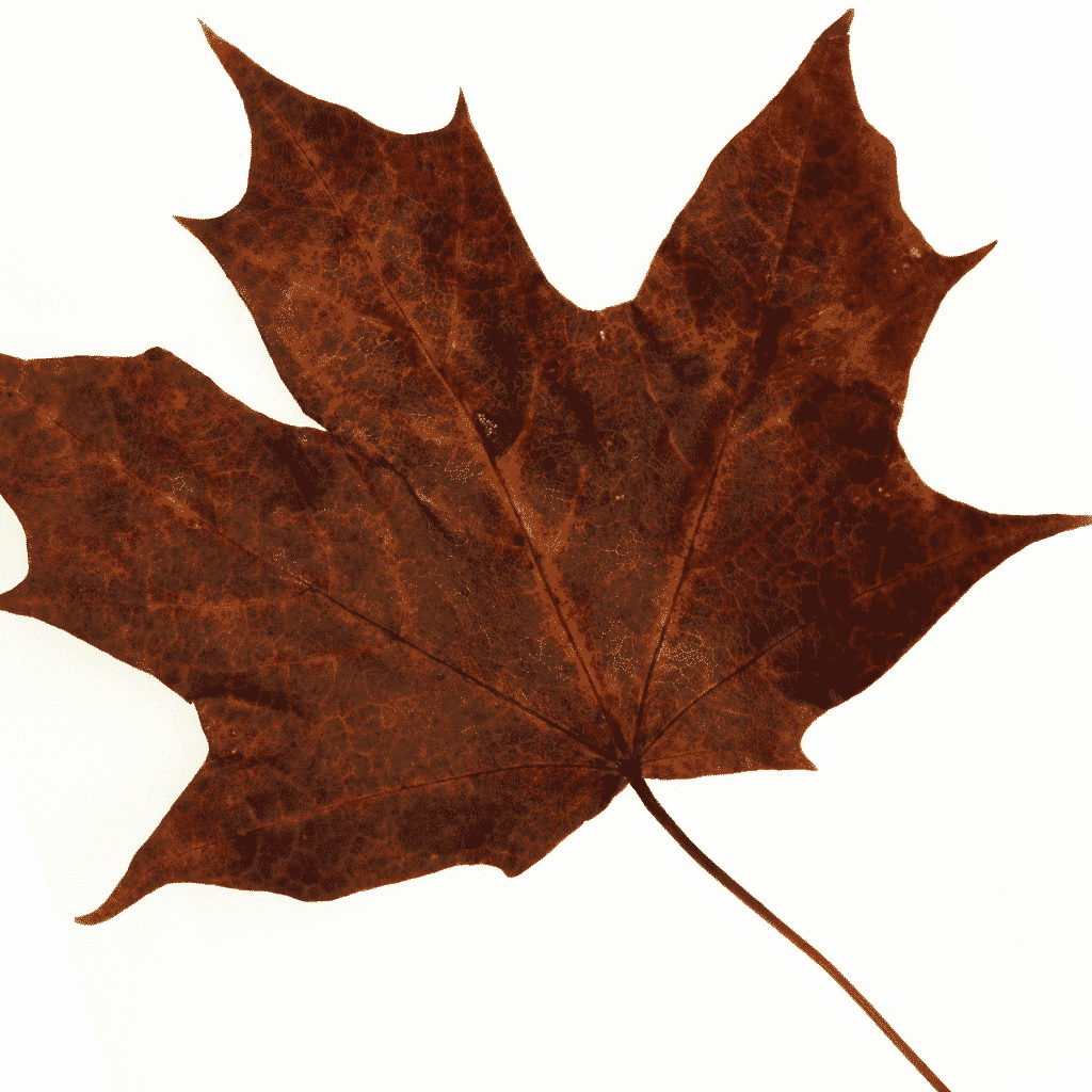 maple leaf extract